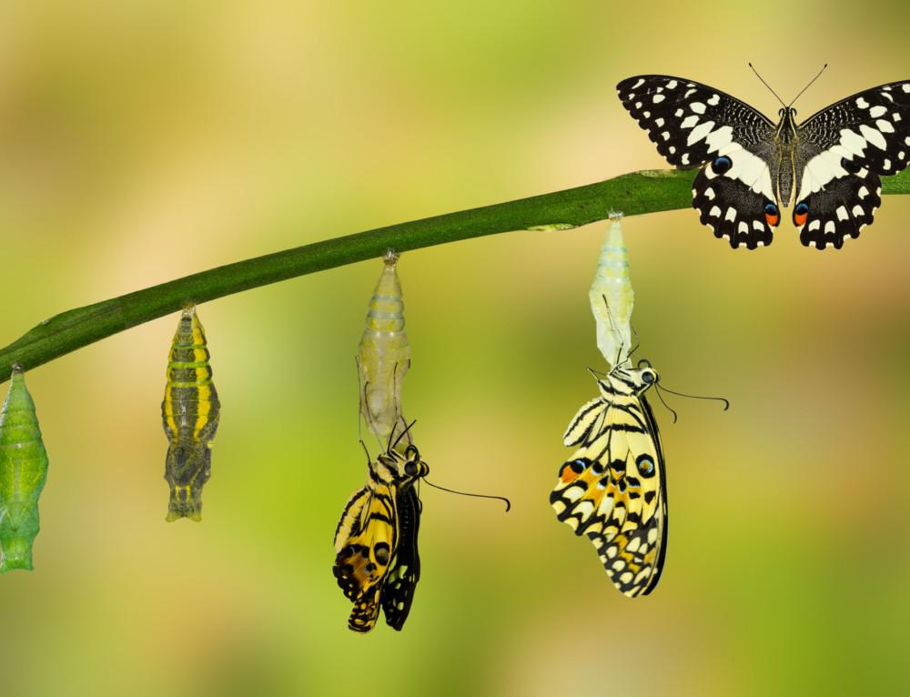 Lasting Change Demands Transformational Leadership