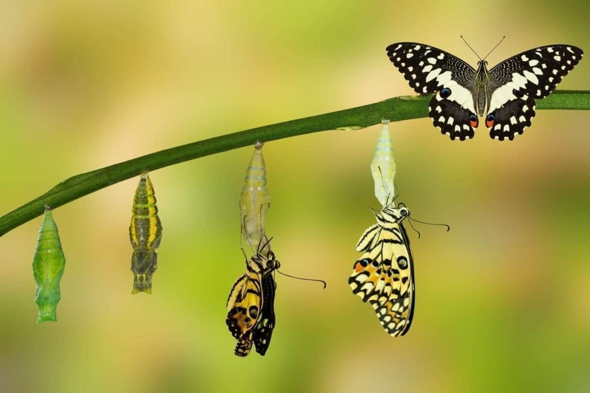 Butterfly transformation with Leadership Coaching at Kinetic Insights